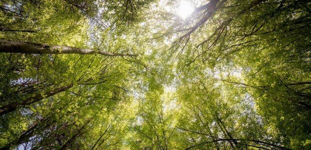 Conheça o que a Ticket Log faz para promover a neutralidade climática